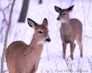 baby deer winter cold snow