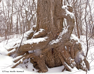 creepy sleepy hollow tree point pelee park snow ontario canada