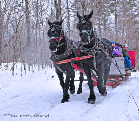 sleigh rides horse fultons