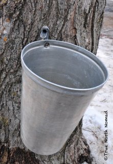 maple sap collection bucket fultons