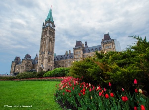 parliament buildings ottawa ontario canada tulips