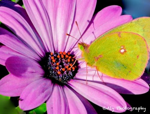 bug flower