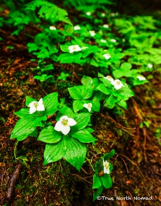 flowers-fundy-national-park