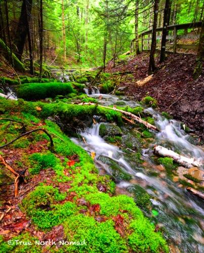 stream-fundy-national-park