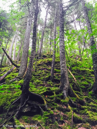 trees-forest-floor