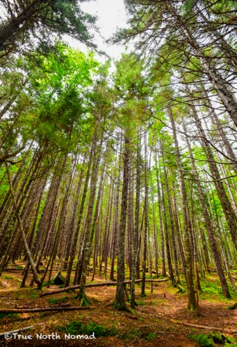 trees-fundy-national-park