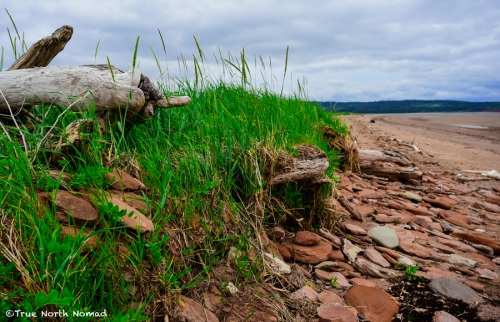 bay-of-fundy-waterside-log
