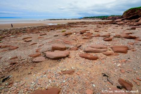 bay-of-fundy-waterside-low-tide