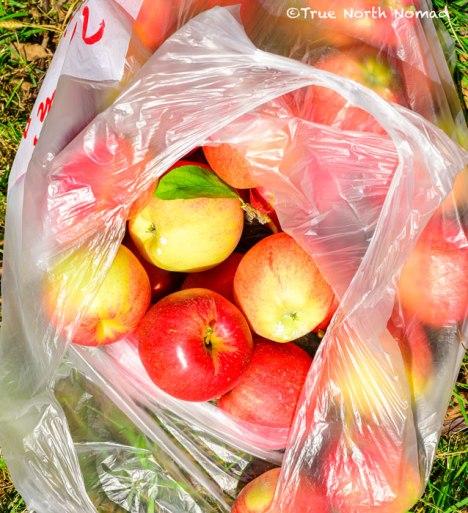 bag-apples