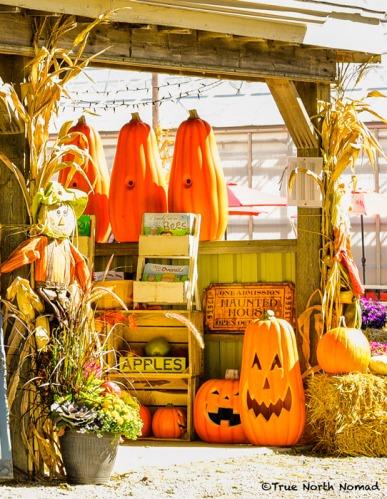 pumpkins-apples-scarecrow