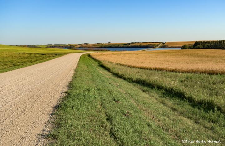 crooked bush, Saskatchewan, aspen grove, crooked trees, travel