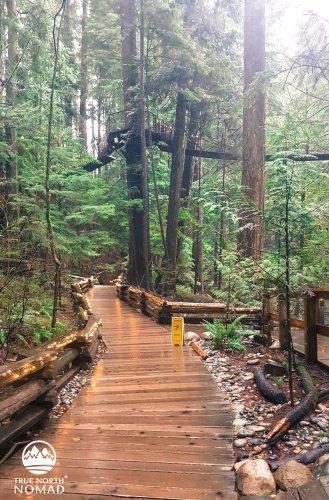 capilano suspension bridge, vancouver, british columbia, treetop adventure, cliff walk, canyon lights, travel, wanderlust